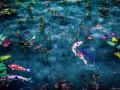 Monet'sPond03.jpg