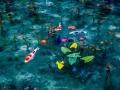 Monet'sPond10.jpg